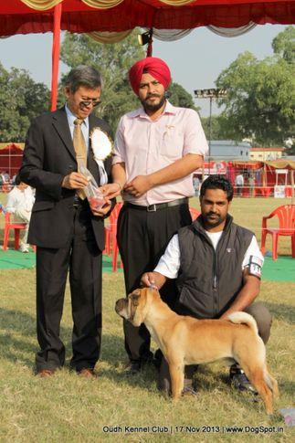 bob,ex-111,shar pei,sw-101,, Lucknow Dog Show 2013, DogSpot.in