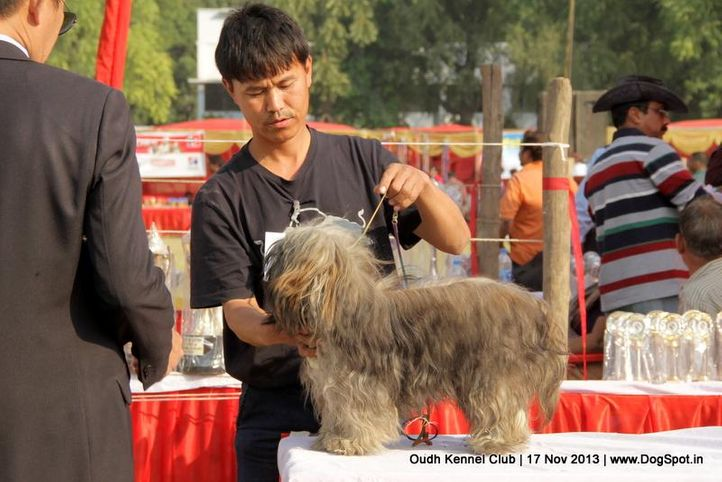 ex-106,lhasa apso,sw-101,, Lucknow Dog Show 2013, DogSpot.in