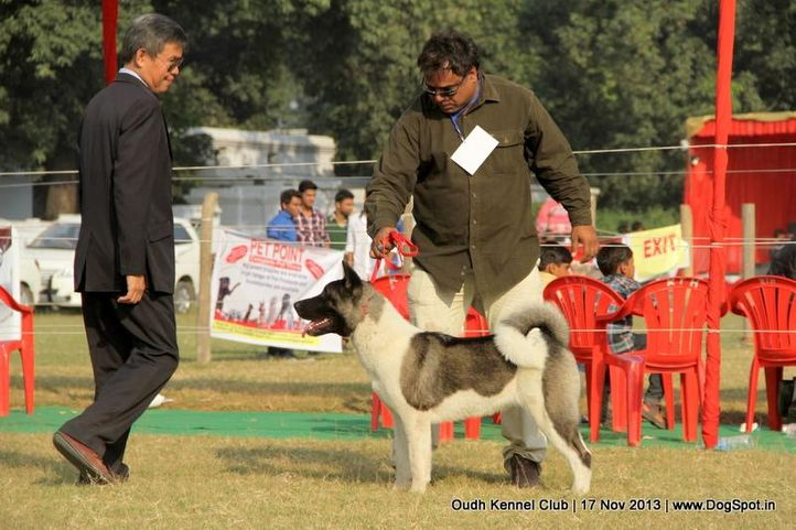 akita,ex-103,sw-101,, Lucknow Dog Show 2013, DogSpot.in