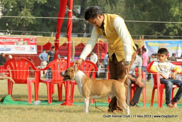 american staffordshire terrier,ex-102,sw-101,, Lucknow Dog Show 2013, DogSpot.in