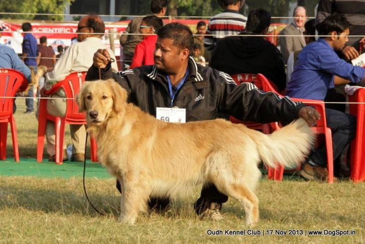 ex-69,golden retriever,sw-101,, Lucknow Dog Show 2013, DogSpot.in