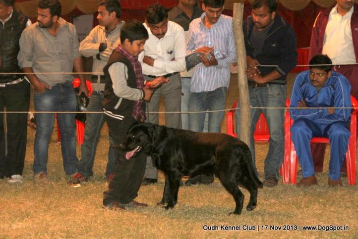 child handler,sw-101,, Lucknow Dog Show 2013, DogSpot.in