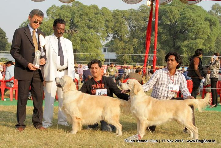 bob,ex-66,ex-68,golden retriever,sw-101,, Lucknow Dog Show 2013, DogSpot.in