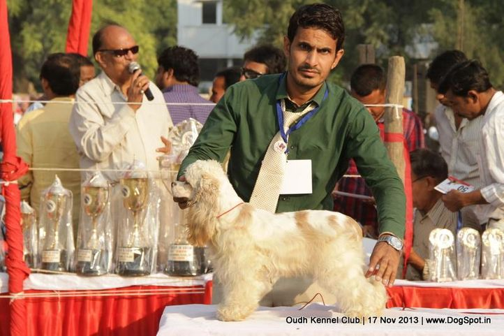 cocker spaniel,ex-63,sw-101,, Lucknow Dog Show 2013, DogSpot.in