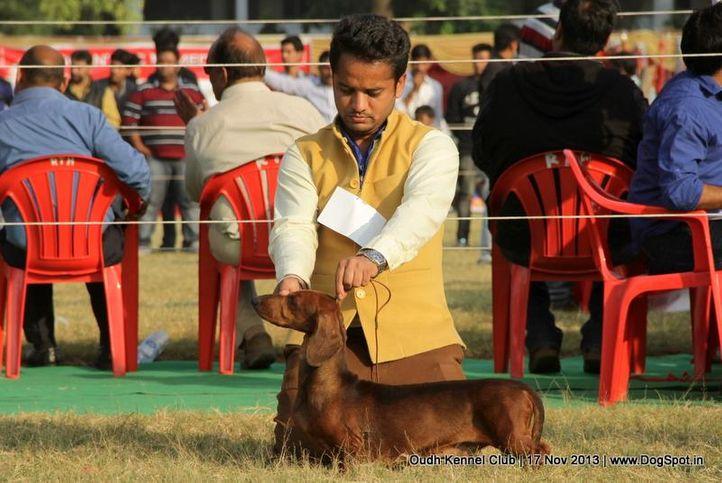 dachshund,sw-101,, Lucknow Dog Show 2013, DogSpot.in