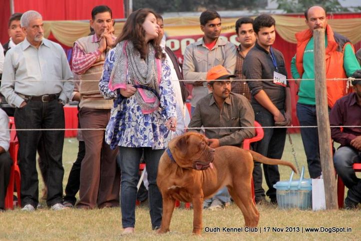 sw-101,women handler,, Lucknow Dog Show 2013, DogSpot.in