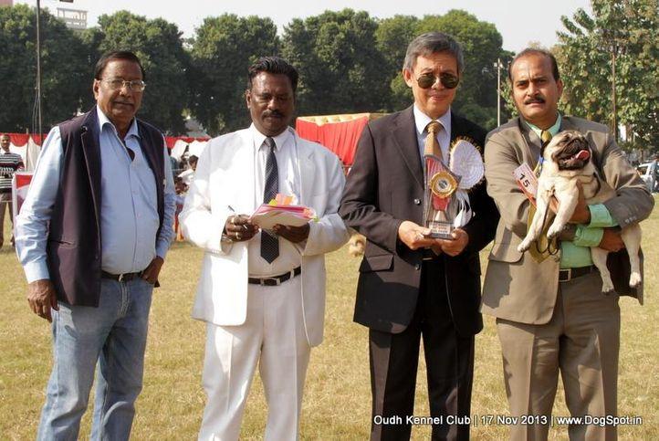 bog,ex-15,pug,sw-101,, Lucknow Dog Show 2013, DogSpot.in