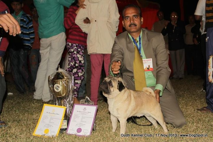 ex-15,pug,sw-101,, Lucknow Dog Show 2013, DogSpot.in