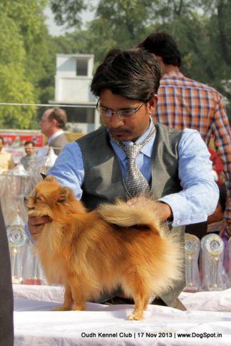 ex-11,pomeranian,sw-101,, Lucknow Dog Show 2013, DogSpot.in