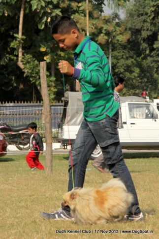 ex-9,pomeranian,sw-101,, Lucknow Dog Show 2013, DogSpot.in