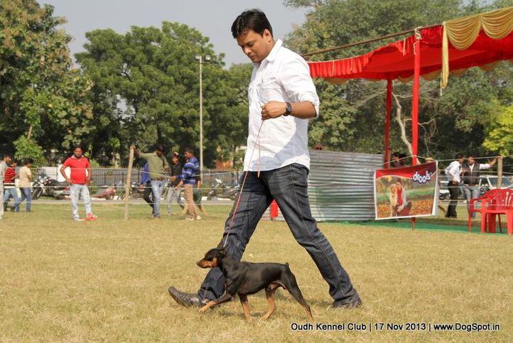 ex-2,miniature pinscher,sw-101,, Lucknow Dog Show 2013, DogSpot.in