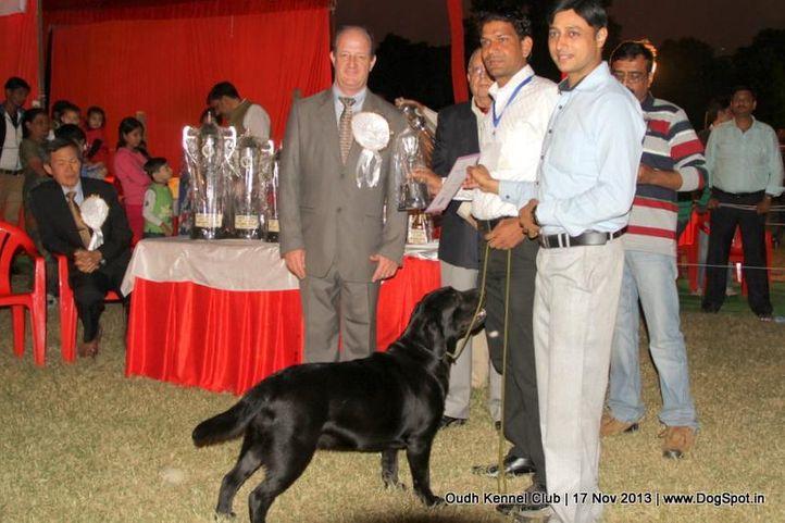 bis,labrador retriever,sw-101,, Lucknow Dog Show 2013, DogSpot.in