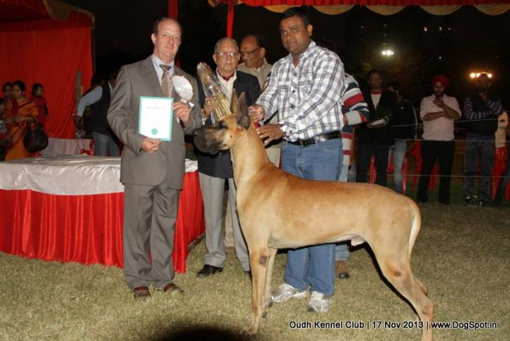 bis,ex-161,great dane,sw-101,, Lucknow Dog Show 2013, DogSpot.in