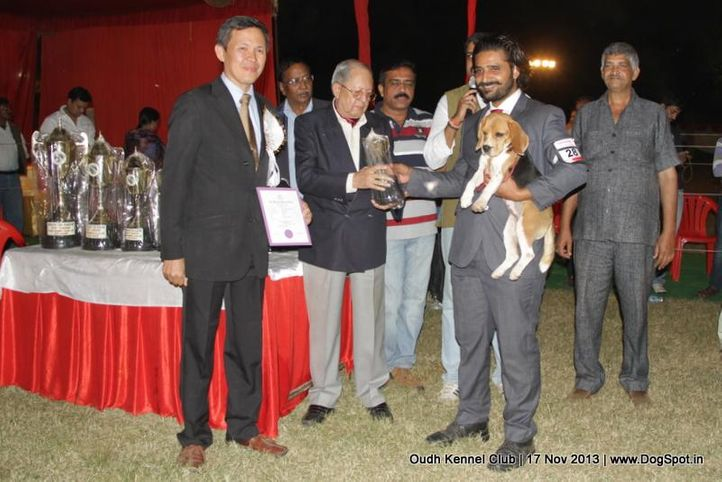 beagle,bis,ex-28,sw-101,, Lucknow Dog Show 2013, DogSpot.in