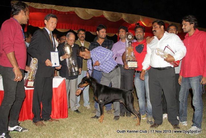 bis,dobermann,ex-148,sw-101,, Lucknow Dog Show 2013, DogSpot.in