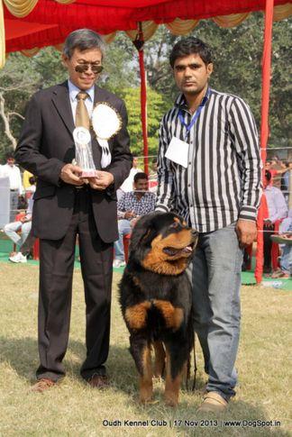 bob,ex-198,sw-101,tibetan mastiff,, Lucknow Dog Show 2013, DogSpot.in