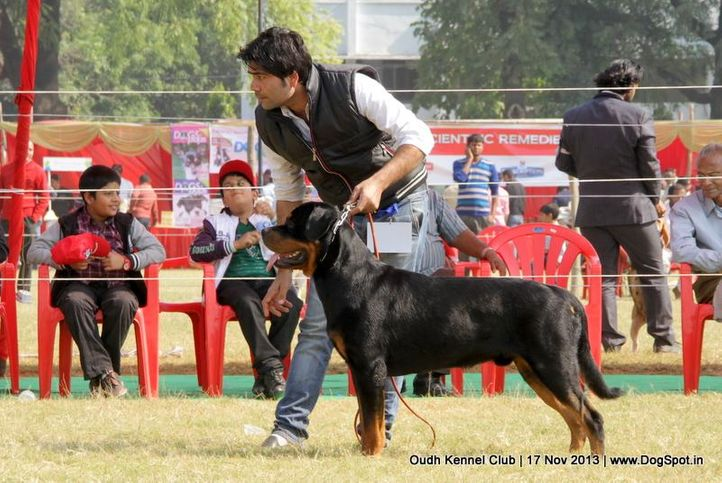 rottweiler,sw-101,, Lucknow Dog Show 2013, DogSpot.in