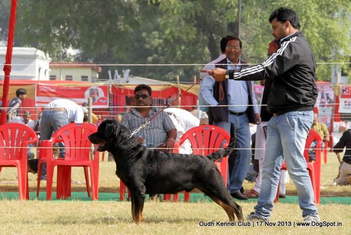 ex-173,rottweiler,sw-101,, Lucknow Dog Show 2013, DogSpot.in
