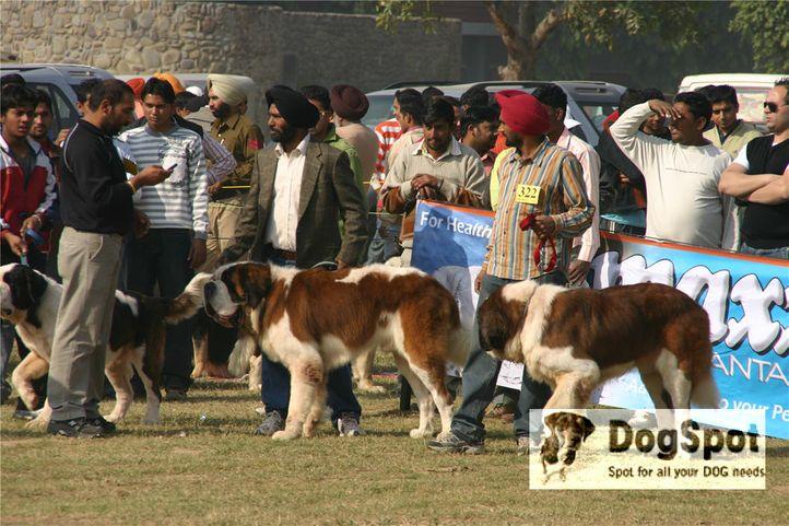 stbernard,, Ludhiana Dog Show 2008, DogSpot.in