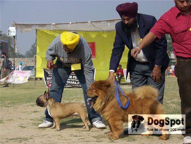chowchow,, Ludhiana Dog Show 2008, DogSpot.in