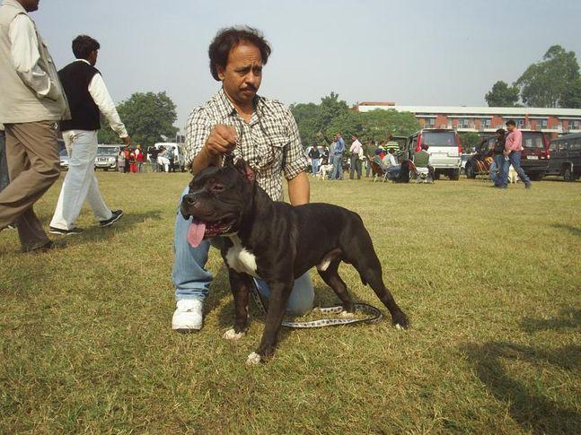 , ludhiana dog show 2009, DogSpot.in