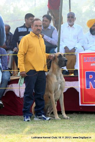 great dane,people,sw-66,, Ludhiana Dog Show 2012, DogSpot.in