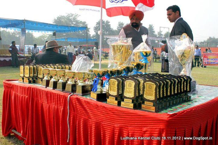 show trophy,sw-66,, Ludhiana Dog Show 2012, DogSpot.in