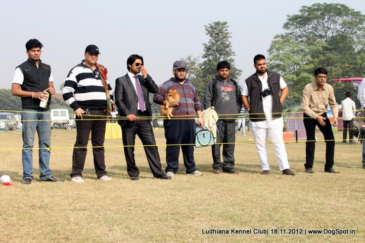 people,sw-66,, Ludhiana Dog Show 2012, DogSpot.in