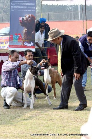 boxer,judges,sw-66,, Ludhiana Dog Show 2012, DogSpot.in