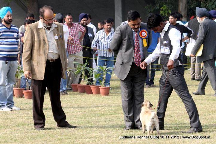judges,pug,sw-66,, Ludhiana Dog Show 2012, DogSpot.in