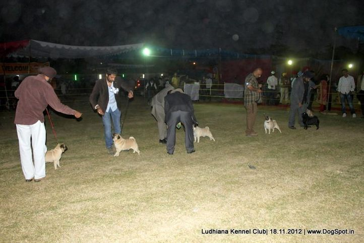 line up,pug,sw-66,, Ludhiana Dog Show 2012, DogSpot.in