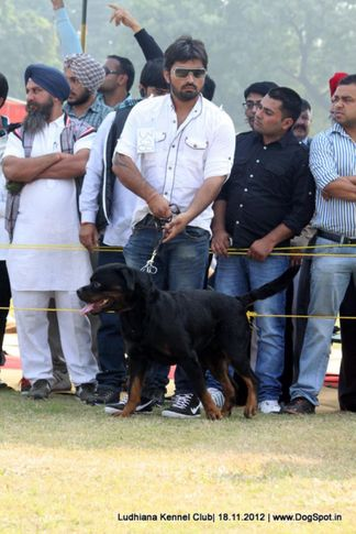 people,rottweiler,sw-66,, Ludhiana Dog Show 2012, DogSpot.in