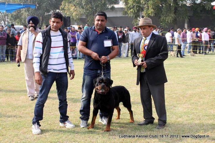 ex-249,judges,sw-66,, EL DIABLO BRCKO STAR, Rottweiler, DogSpot.in