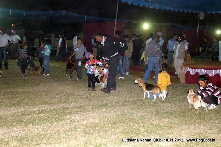 sw-66,, Ludhiana Dog Show 2012, DogSpot.in