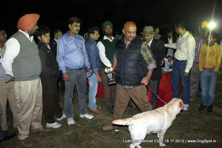 line up,sw-66,, Ludhiana Dog Show 2012, DogSpot.in