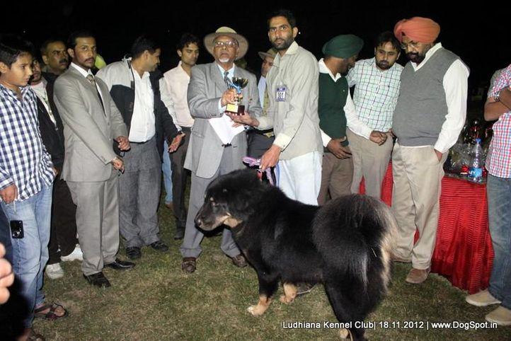 line up,sw-66,ex-301, BADAL, Himalyan Sheep Dog, DogSpot.in