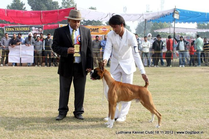 boxer,ex-166,judges,sw-66,, CHESSEL'S N HAPPY TAIL'S THX THE GOD FATHER, Boxer, DogSpot.in