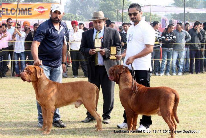 dogue de bordeaux,judges,sw-66,, Ludhiana Dog Show 2012, DogSpot.in