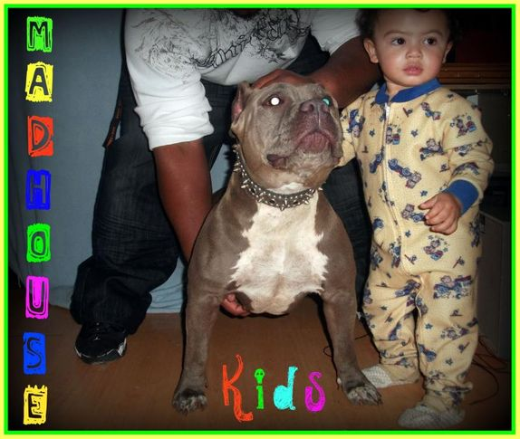 madhouse bullies   999-030-5773, MADHOUSE BULLIES   999-030-5773, DogSpot.in
