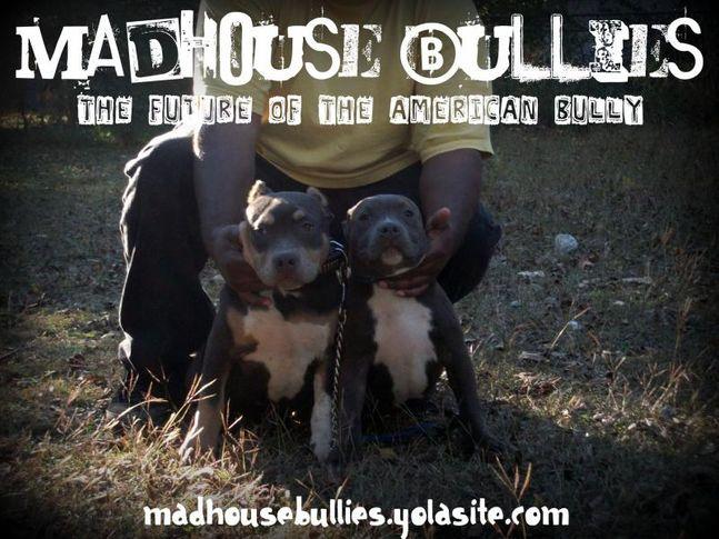 madhouse bullies my yard 2011, MADHOUSE BULLIES MY YARD 2011, DogSpot.in