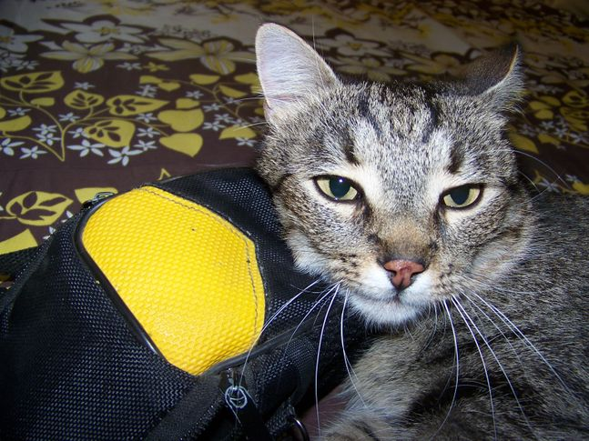 , Maia lying on my camera cover, DogSpot.in