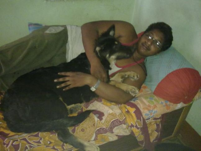 rott  pups, me n my GSD, DogSpot.in