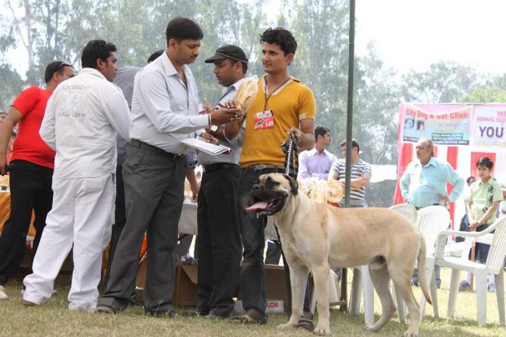 Mastiff,, Meerut Dog Show, DogSpot.in