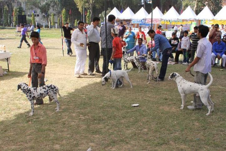 Dalmatian,, Meerut Dog Show, DogSpot.in