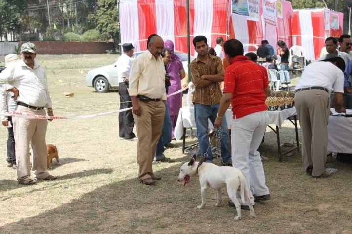 Terrier,, Meerut Dog Show, DogSpot.in