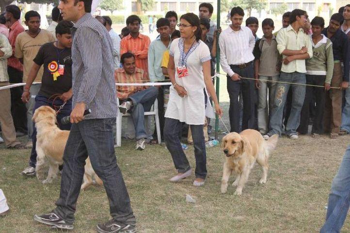 Golden Retriever,, Meerut Dog Show, DogSpot.in