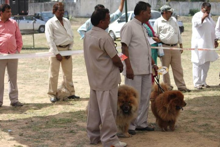 Chow Chow,, Meerut Dog Show, DogSpot.in