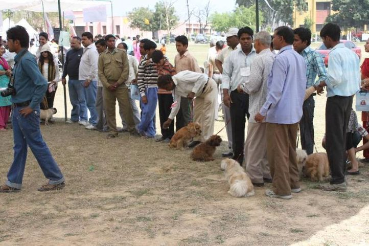 cocker spaniel,, Meerut Dog Show, DogSpot.in