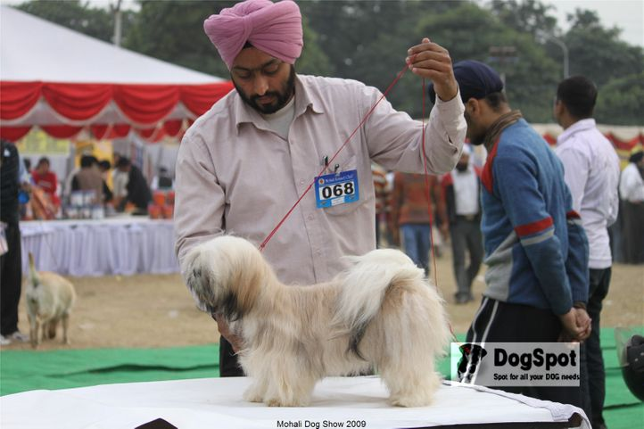 Lhasa Apso,, Mohali Dog Show, DogSpot.in