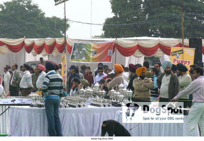 Rott,, Mohali Dog Show, DogSpot.in